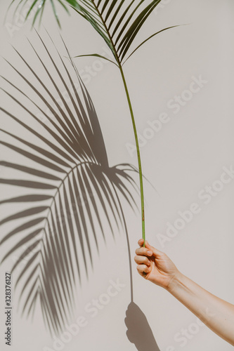 Palm branch in hand casts interesting shadow on wall Wall mural