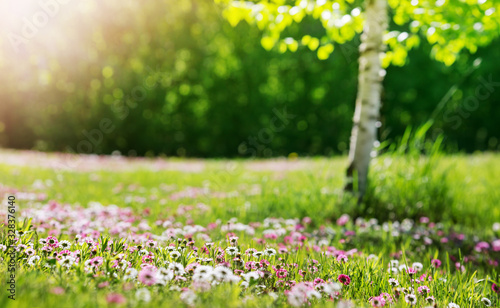 obraz lub plakat Meadow with lots of white and pink spring daisy flowers in sunny day