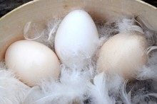 Eggs In Feathers In A Wooden S...
