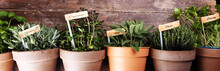 Homegrown And Aromatic Herbs I...