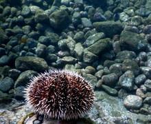Pacific Sea Life