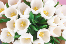 A Bouquet Of White Tulips. Spr...