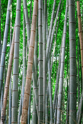 Photo green bamboo forest