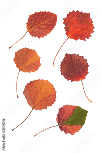 Photo Multicolored asp leaves on white background, isolated