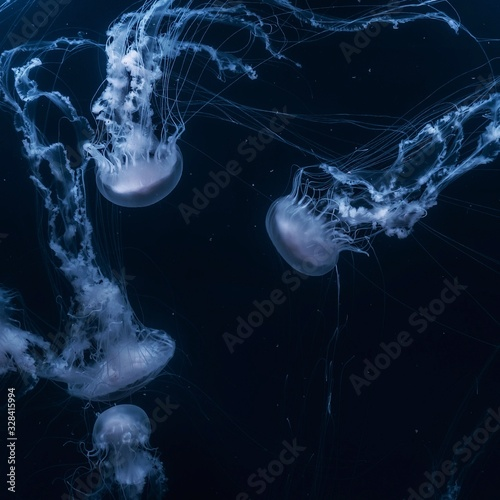 Photographie blue jellyfish on black background