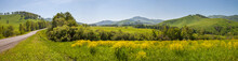 Panoramic View Of A Meadow Blo...