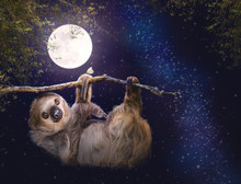 Cute Sloth Hanging On Branch I...