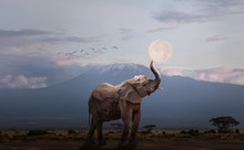 Elephant Holding Up Moon In Af...