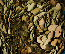 Dried Bay Leaves, Chefchaouen ...