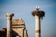 Storks Nested On Top Of One Of...