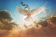canvas print picture - White Dove carrying olive leaf branch on Beautiful light and lens flare .Freedom concept and international day of peace