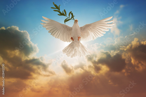 Foto En Lienzo - White Dove carrying olive leaf branch on Beautiful light and lens flare .Freedom concept and international day of peace