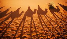 Shadows Of Camel Riders In The...