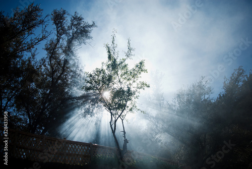 tree in the fog, Atlas Mountains, Morocco - 328433958