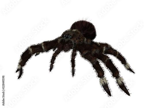 Black tarantula spider isolated single pose 3d rendering Canvas Print