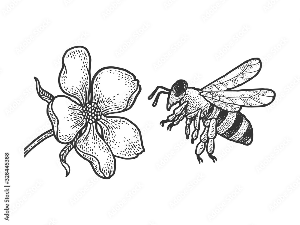 Fototapeta bee flies to a flower sketch engraving vector illustration. T-shirt apparel print design. Scratch board imitation. Black and white hand drawn image.