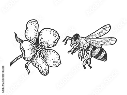 Fototapeta bee flies to a flower sketch engraving vector illustration. T-shirt apparel print design. Scratch board imitation. Black and white hand drawn image. obraz