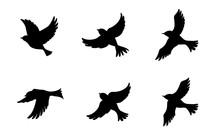 飛ぶ鳥のシルエットセ...
