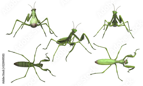 Photo Praying mantis looking up with rolled eyes on white background multiple poses 3d