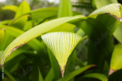 Wild palm grass plant Canvas Print