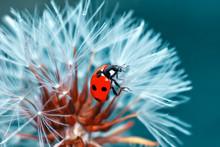 Beautiful Ladybug On Leaf Defo...