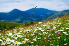 Nature, Summer Landscape In Ca...
