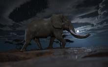 An Mle African Elephant Climbi...