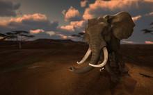 Huge African Elephant Running ...
