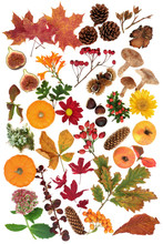 Autumn Nature Study With A Lar...
