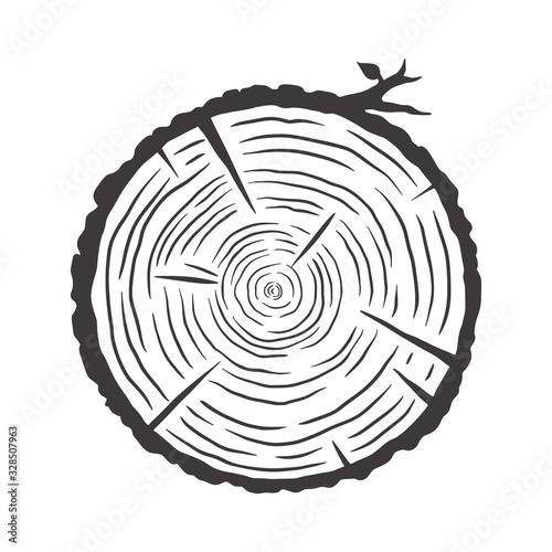 Wood texture rings slice of tree wooden stump Fototapeta