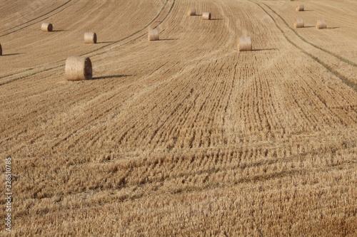 Round bales of hay in rural field in summer in England West Yorkshire, Britain U Canvas Print