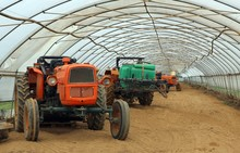 Old Vintage Tractors From The Sixties Still Working, In An Agricultural Shed