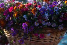 Macro Multicolored Wildflowers...