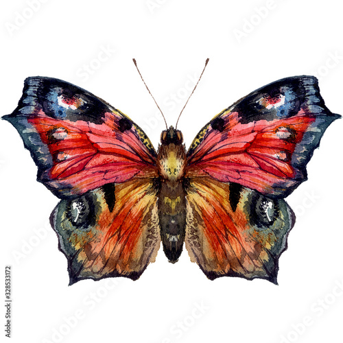 Carta da parati Watercolor Illustration of Peacock Butterfly