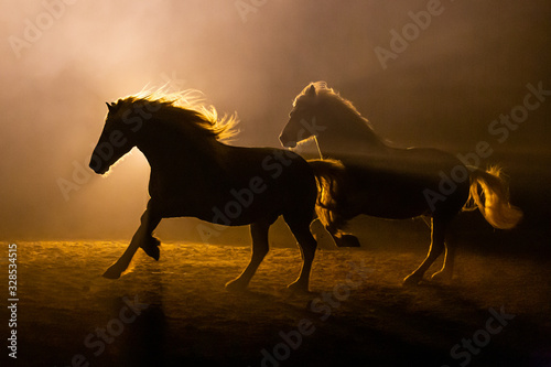 Fotomural Silhouette of two galloping Haflinger Horses in a orange smokey atmosphere