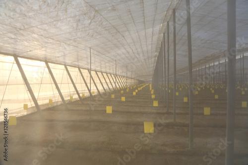 Photo invernadero agricultura almería 4M0A7443-as20