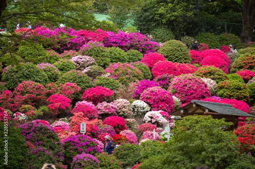 Photo beautiful blooming azalea flowers garden in tokyo
