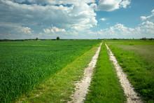 A Dirt Road In A Green Field, ...