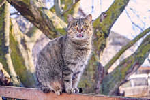 Rural Street Cat Sitting On  Fence. Cat Meows