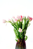 Fototapeta Tulipany - Spring flowers pink tulips in a pink vase on a white background