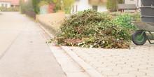 Garden Waste From Cutting Shru...