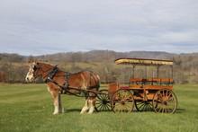 Belgian Carriage Horse