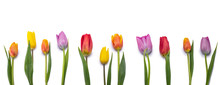 Tulips Isolated On White Backg...