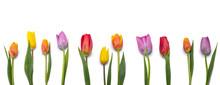 Tulips Isolated On White Backg...