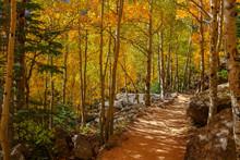 Mountain Trial Through Aspen Trees In Autumn