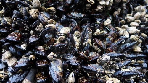 barnacles Wallpaper Mural