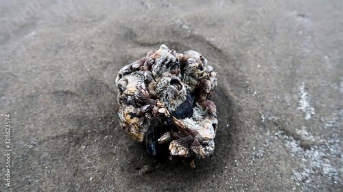 Photo barnacles on the beach