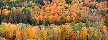 Panoramic View Of Fall Foliage...