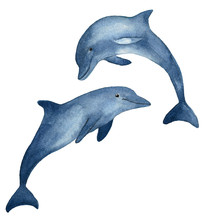 Two Blue Dolphins Hand Drawn W...