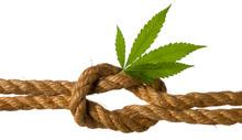 Sea Knot On Sativa Rope Made O...